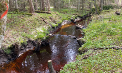 Mai 2020. Lamapuidust puhastatud jõgi projektialal lõpus. Kadunud on viimasedki varjepaigad.