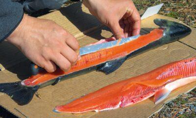 Milline on parim nuga kala fileerimiseks?