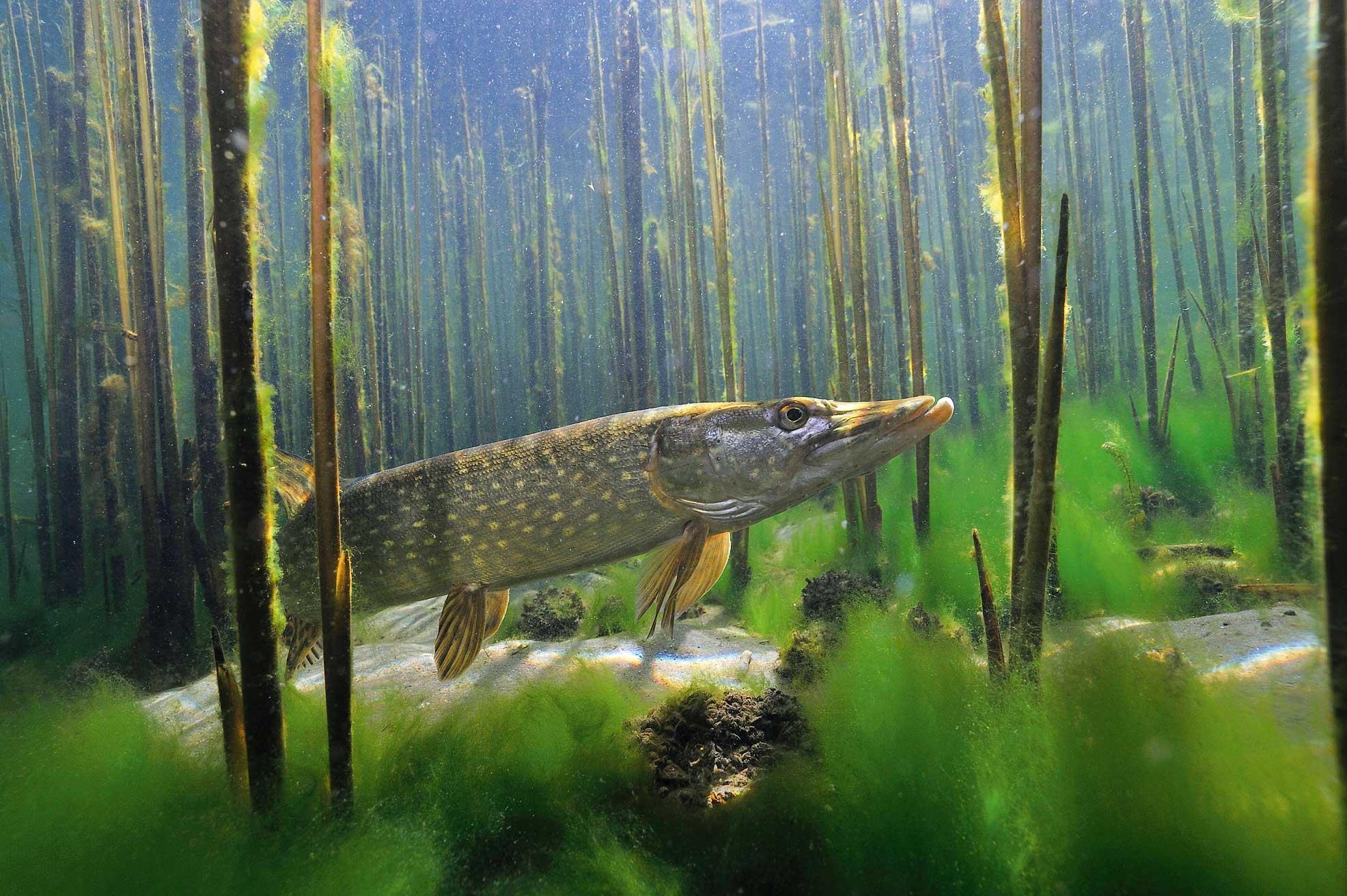 Aasta kala 2021 haug